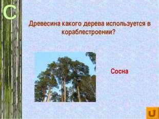 Древесина какого дерева используется в кораблестроении? Сосна