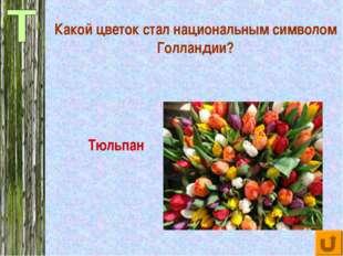 Какой цветок стал национальным символом Голландии? Тюльпан