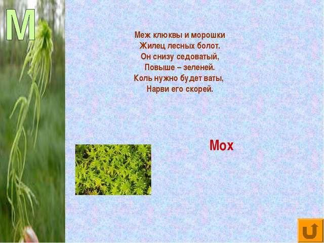 Меж клюквы и морошки Жилец лесных болот. Он снизу седоватый, Повыше – зеленей...