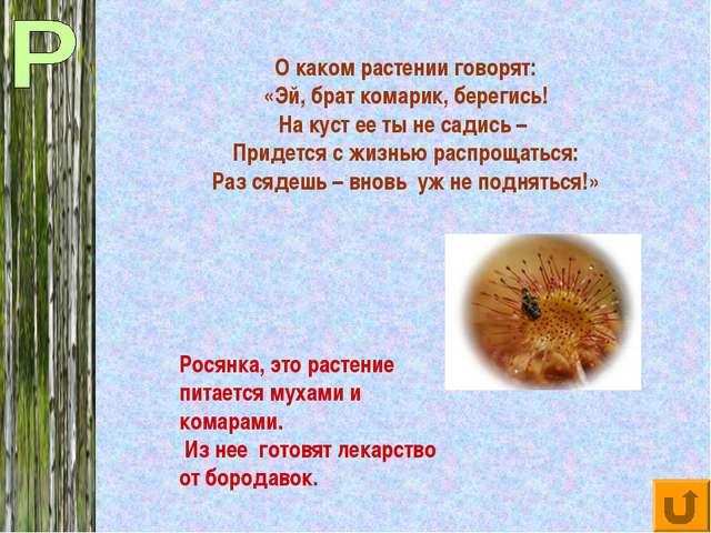 О каком растении говорят: «Эй, брат комарик, берегись! На куст ее ты не садис...