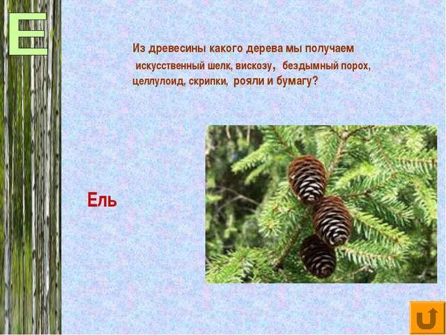 Из древесины какого дерева мы получаем искусственный шелк, вискозу, бездымный...