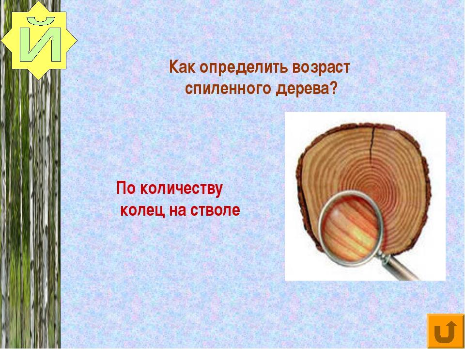 Как определить возраст спиленного дерева? По количеству колец на стволе