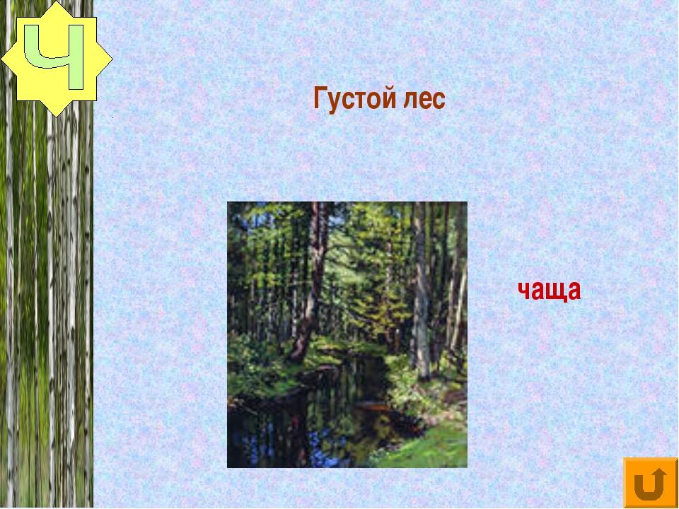 Густой лес чаща