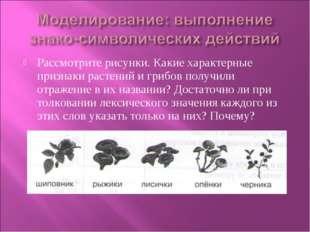 Рассмотрите рисунки. Какие характерные признаки растений и грибов получили от