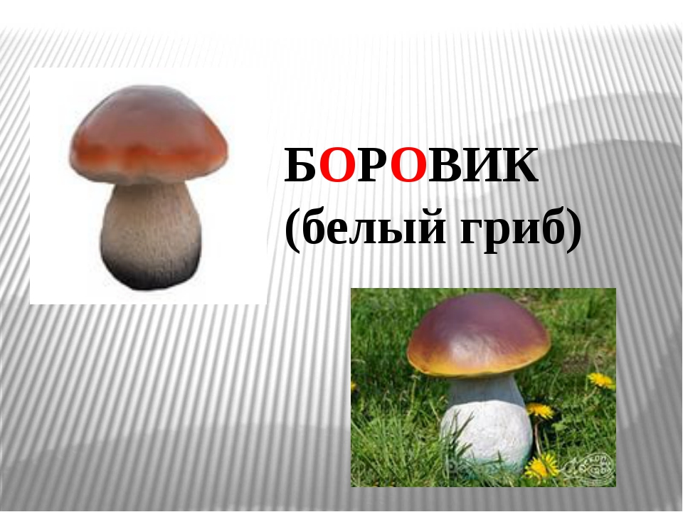 Белый гриб презентация