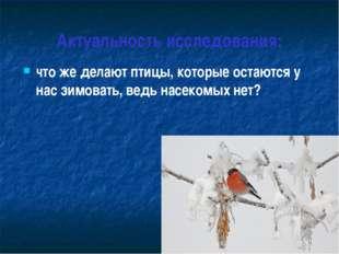 Актуальность исследования: что же делают птицы, которые остаются у нас зимова