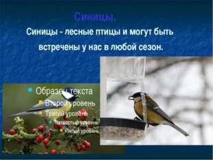 Синицы. Синицы - лесные птицы и могут быть встречены у нас в любой сезон.
