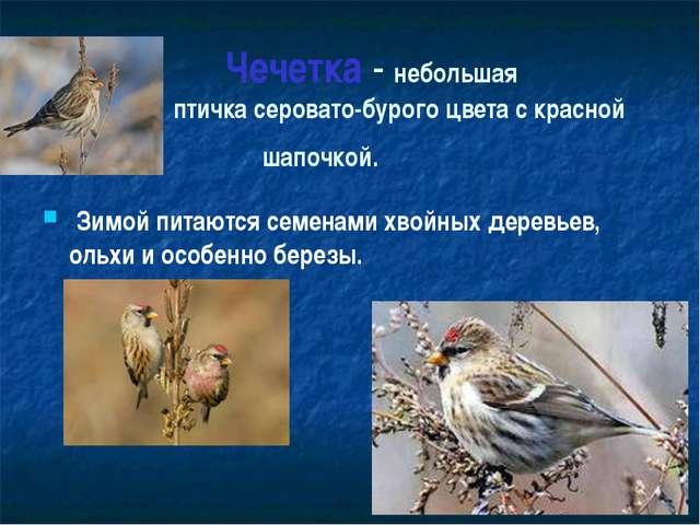 Чечетка - небольшая птичка серовато-бурого цвета с красной шапочкой. Зимой п...