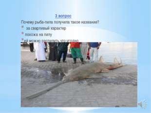 3 вопрос Почему рыба-пила получила такое название? за сварливый характер пох