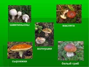 шампиньоны маслята волнушки сыроежки белый гриб