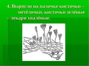 4. Выросли на палочке кисточки – метёлочки, кисточки зелёные – лекари хвалёны