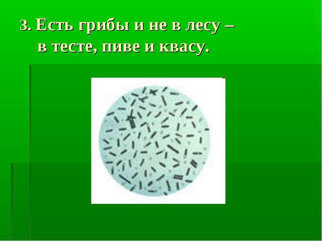 3. Есть грибы и не в лесу – в тесте, пиве и квасу.