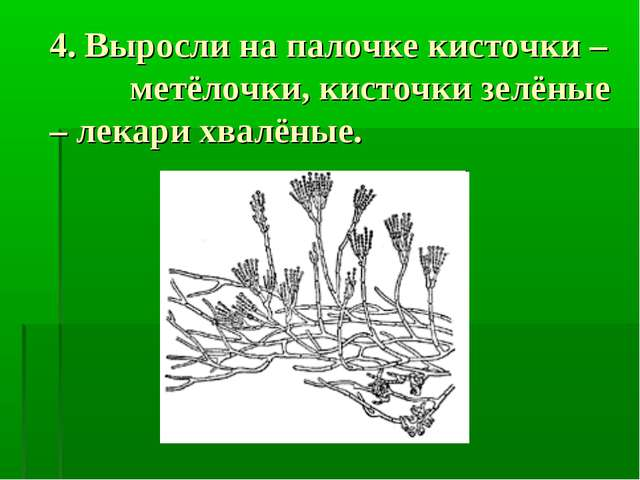 4. Выросли на палочке кисточки – метёлочки, кисточки зелёные – лекари хвалёны...