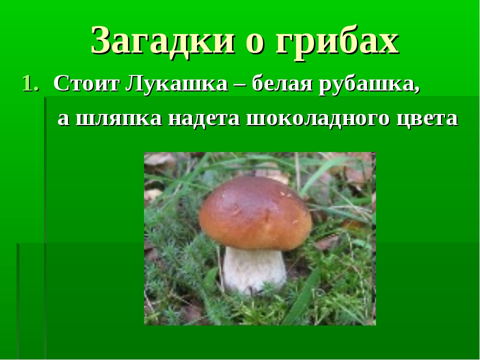 Загадки о грибах Стоит Лукашка – белая рубашка, а шляпка надета шоколадного ц...