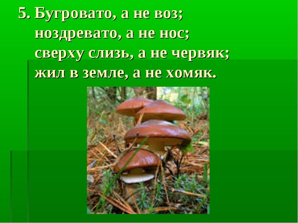 5. Бугровато, а не воз; ноздревато, а не нос; сверху слизь, а не червяк; жил...