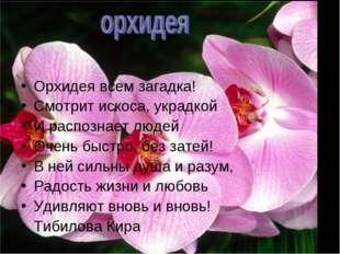 Орхидея всем загадка! Смотрит искоса, украдкой И распознает людей Очень быст
