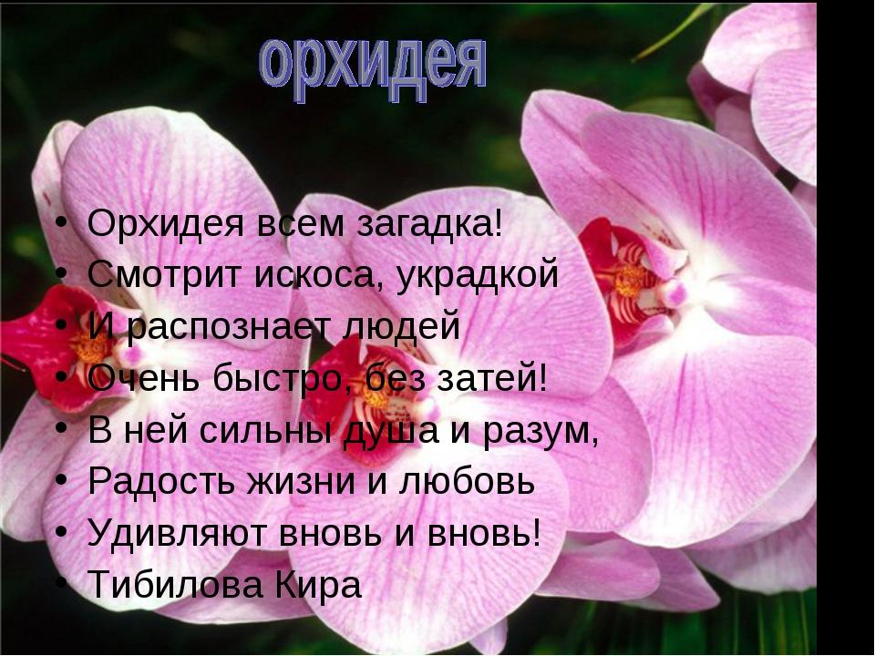 Орхидея всем загадка! Смотрит искоса, украдкой И распознает людей Очень быст...