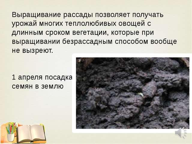Выращивание рассады позволяет получать урожай многих теплолюбивых овощей с дл...