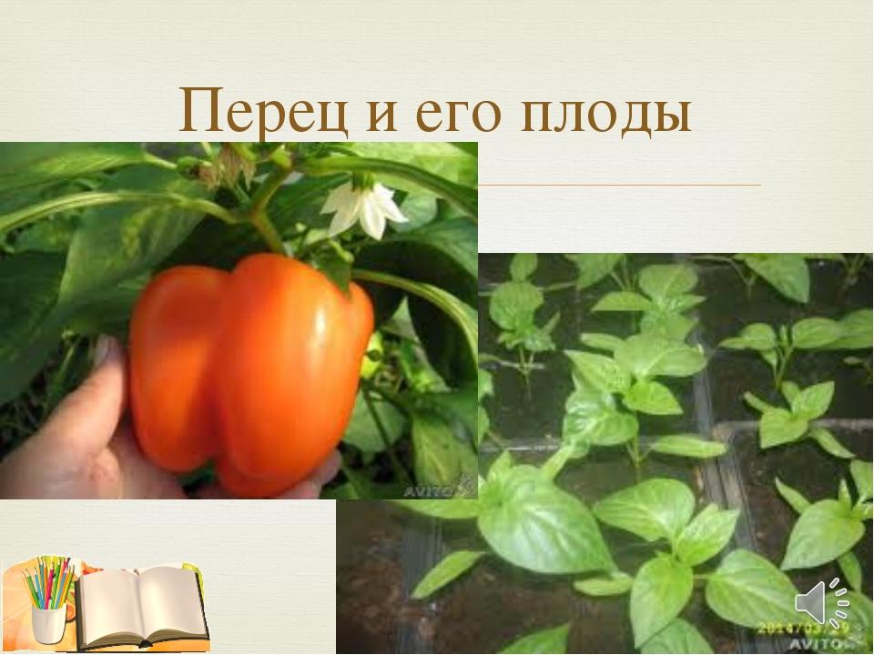 Перец и его плоды 