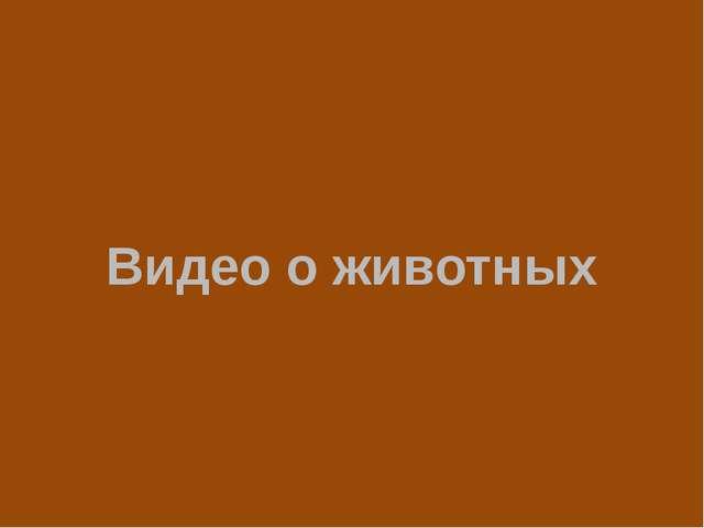 Видео о животных Видео ЛЬВЯТА