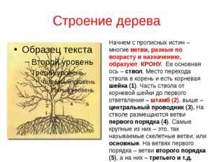 Строение дерева Начнем с прописных истин – многие ветви, разные по возрасту и