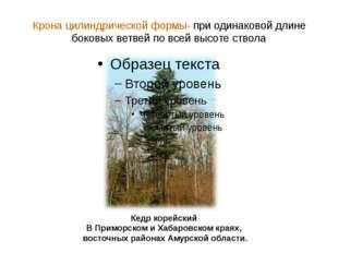 Крона цилиндрической формы- при одинаковой длине боковых ветвей по всей высот