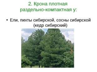 2. Крона плотная раздельно-компактная у: Ели, пихты сибирской, сосны сибирско