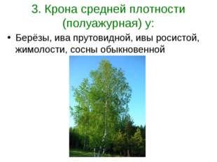 3. Крона средней плотности (полуажурная) у: Берёзы, ива прутовидной, ивы роси
