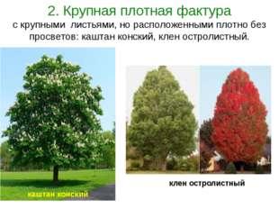 2. Крупная плотная фактура с крупными листьями, но расположенными плотно без