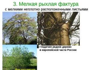 3. Мелкая рыхлая фактура с мелкими неплотно расположенными листьями Гледичия
