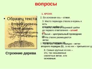 вопросы 8. Самые крупные из них – это, так называемые скелетные ветви, или ос