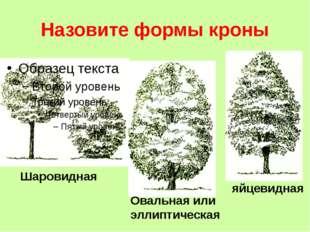 Назовите формы кроны Шаровидная Овальная или эллиптическая яйцевидная