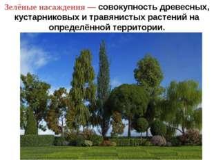 Зелёные насаждения — совокупность древесных, кустарниковых и травянистых раст