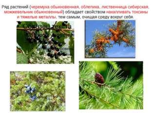 Ряд растений (черемуха обыкновенная, облепиха, лиственница сибирская, можжеве