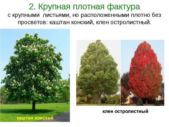 2. Крупная плотная фактура с крупными листьями, но расположенными плотно без...