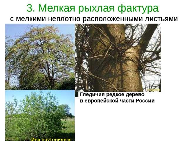 3. Мелкая рыхлая фактура с мелкими неплотно расположенными листьями Гледичия...