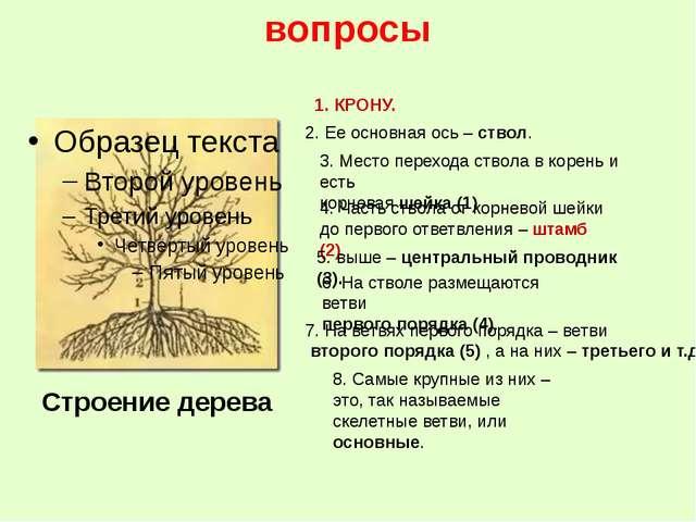 вопросы 8. Самые крупные из них – это, так называемые скелетные ветви, или ос...