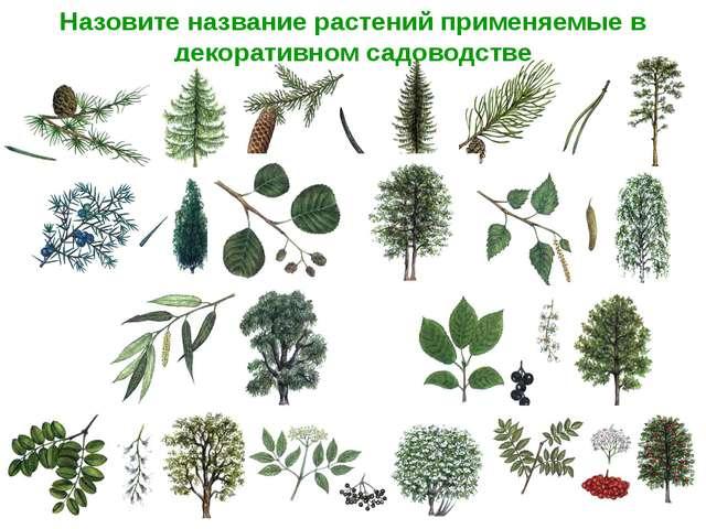 Назовите название растений применяемые в декоративном садоводстве