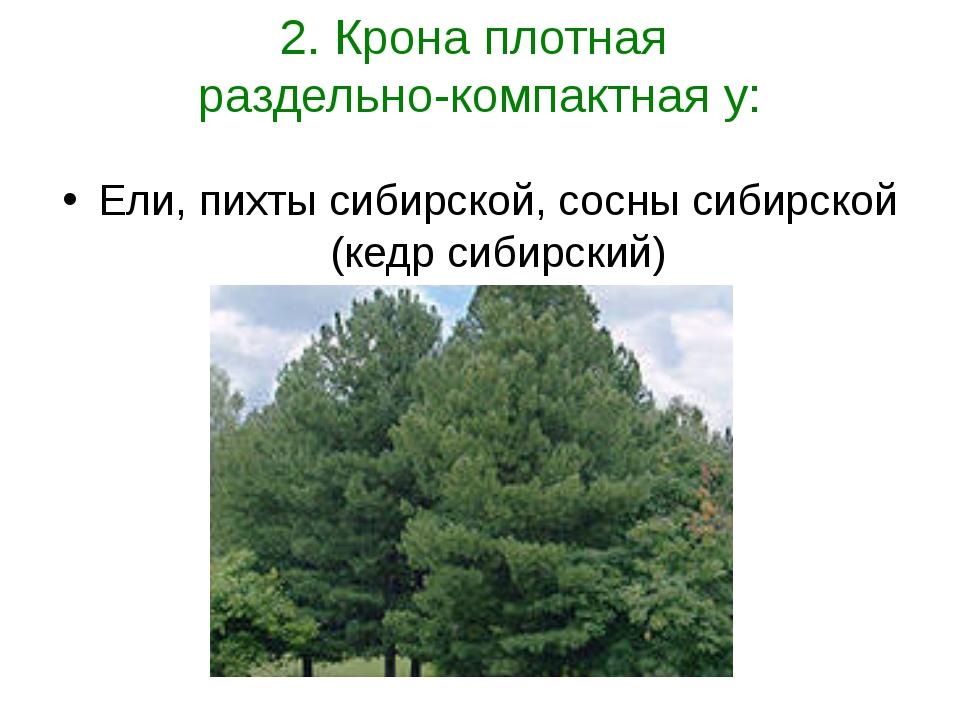 2. Крона плотная раздельно-компактная у: Ели, пихты сибирской, сосны сибирско...