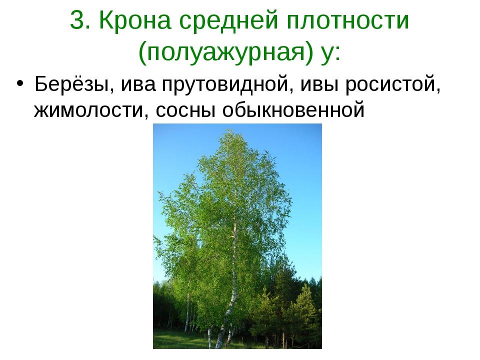 3. Крона средней плотности (полуажурная) у: Берёзы, ива прутовидной, ивы роси...