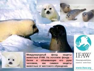 Международный фонд защиты животных IFAW. На логотипе фонда – белек и обнимающ