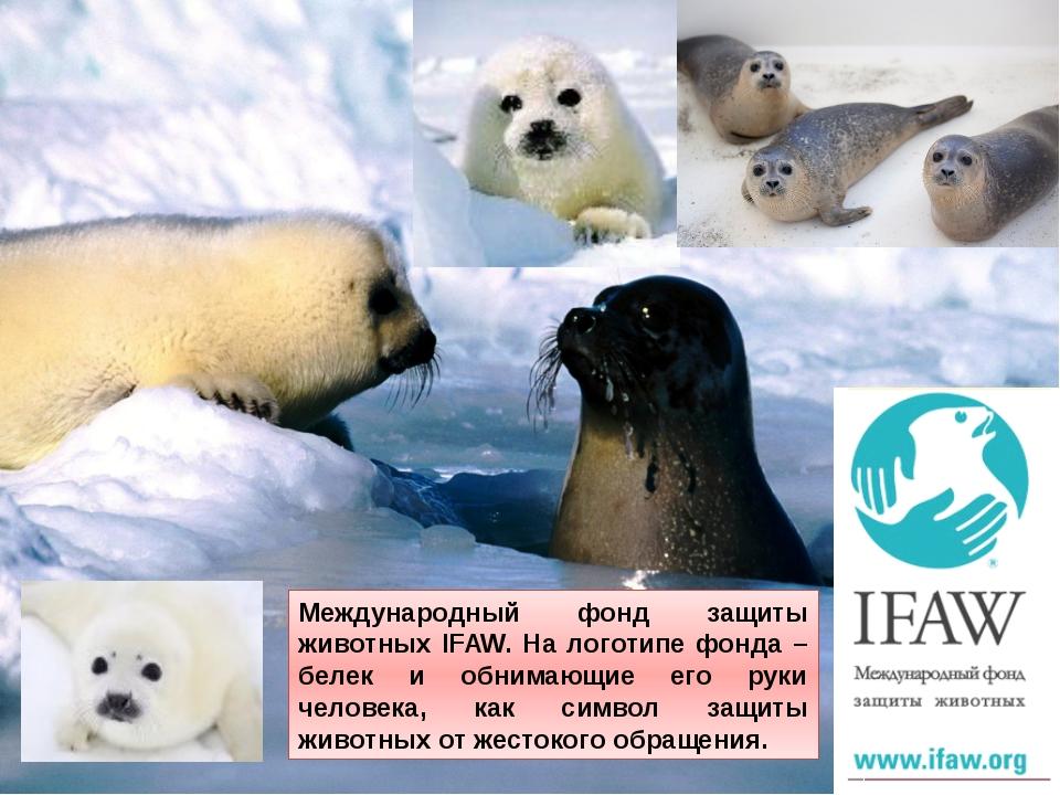Международный фонд защиты животных IFAW. На логотипе фонда – белек и обнимающ...