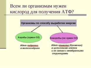 Всем ли организмам нужен кислород для получения АТФ? Организмы по способу выр