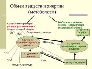Обмен веществ и энергии (метаболизм) Катаболизм – реакции распада (диссимиляц