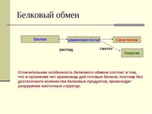 Белковый обмен Белки аминокислоты Свои белки распад синтез Энергия Отличитель