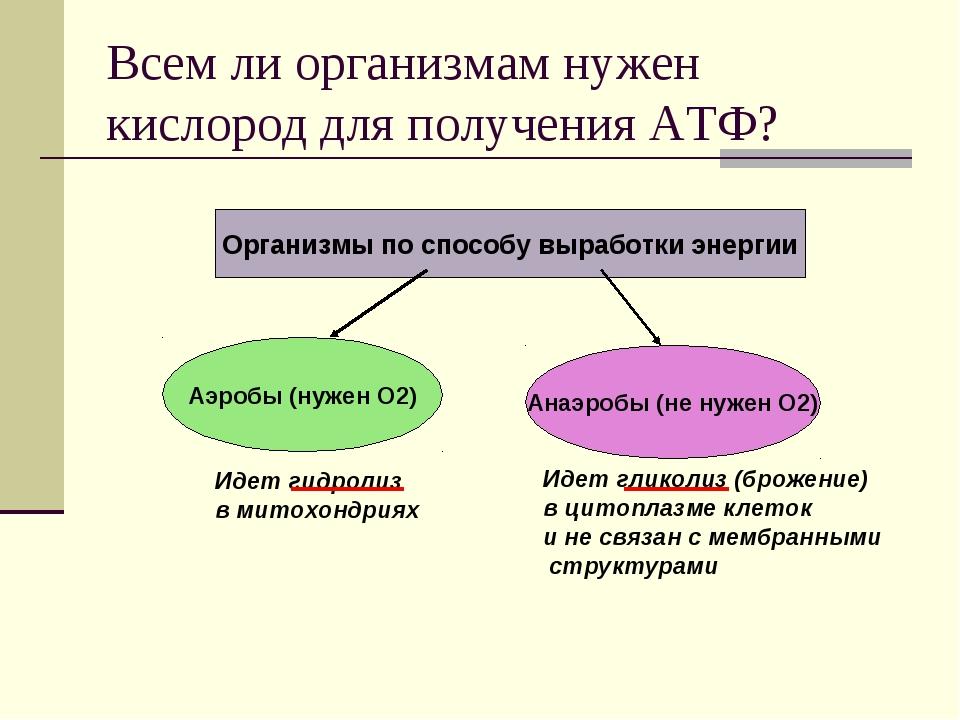 Всем ли организмам нужен кислород для получения АТФ? Организмы по способу выр...