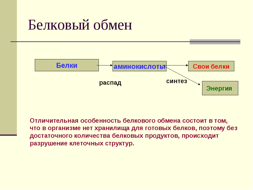 Белковый обмен Белки аминокислоты Свои белки распад синтез Энергия Отличитель...