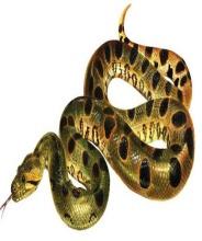 Анаконда - самая большая змея в мире (11 фото)