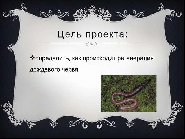 Цель проекта: определить, как происходит регенерация дождевого червя