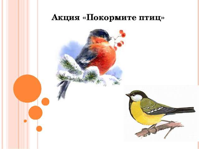 Акция «Покормите птиц»